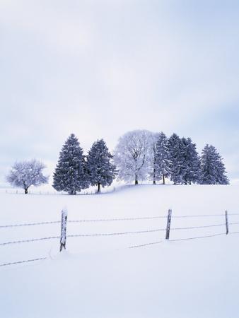 https://imgc.allpostersimages.com/img/posters/germany-bavaria-allgshu-snow-scenery-trees_u-L-Q11YPT80.jpg?p=0
