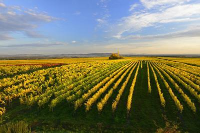 https://imgc.allpostersimages.com/img/posters/germany-bavaria-franconia-north-home-vineyards-in-the-cross-mountain_u-L-Q11YJXD0.jpg?p=0