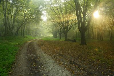 https://imgc.allpostersimages.com/img/posters/germany-saxony-anhalt-near-castle-freyburg-unstrut-sunrays-on-forest-path-in-the-morning-fog_u-L-Q11YILP0.jpg?artPerspective=n