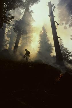 Forest Fire, Sequoia and Kings Canyon National Park, California, USA by Gerry Reynolds