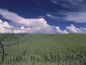 Green Wheat Field, Clouds, Agriculture Fruitland, Idaho, USA by Gerry Reynolds