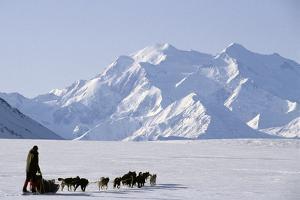 Sled Dogs, Park Ranger, Mount McKinley, Denali National Park, Alaska, USA by Gerry Reynolds