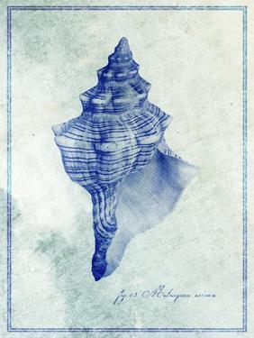 Conch Shell B by GI ArtLab