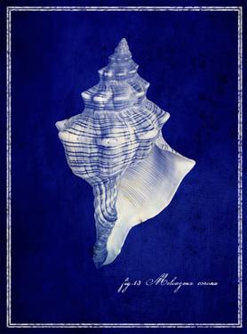 Conch Shell by GI ArtLab