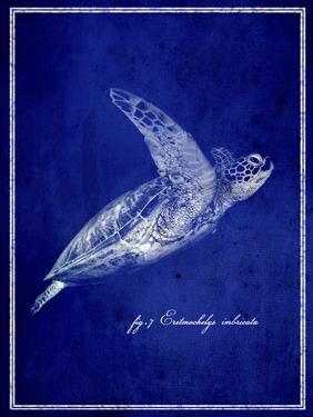 Marine Collection B by GI ArtLab