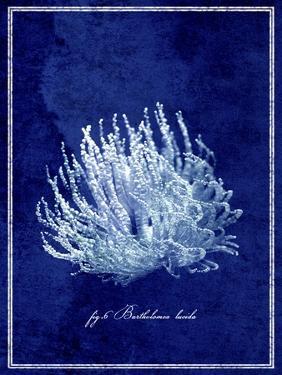 Marine Collection C by GI ArtLab
