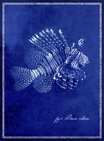 Marine Collection D by GI ArtLab