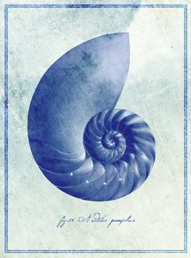 Nautilus Shell B by GI ArtLab