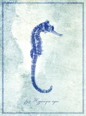 Seahorse B by GI ArtLab