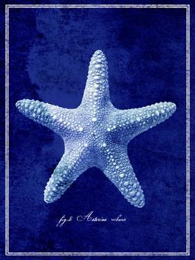 Starfish by GI ArtLab