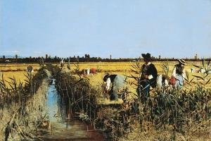 Harvesting Rice in Low Lands of Verona, 1877 by Giacomo Favretto