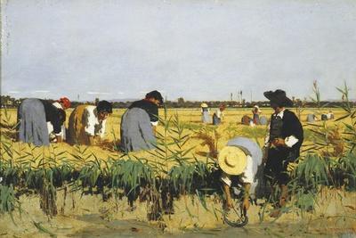 Harvesting Rice in Lowlands of Verona, 1878