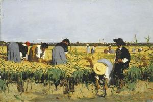 Harvesting Rice in Lowlands of Verona, 1878 by Giacomo Favretto