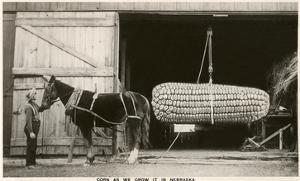 Giant Ear of Corn with Plow Horse, Nebraska