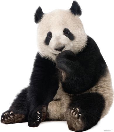 Giant Panda Lifesize Standup