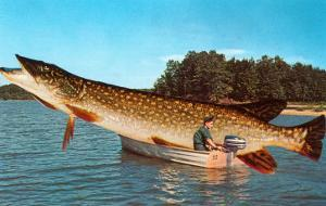 Giant Pike in Boat