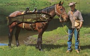 Giant Trout Strapped on Horse