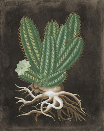 Cactus Botanical I by Giclee Studio
