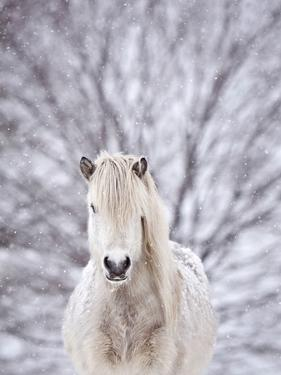 Snow Horse by Gigja Einarsdottir