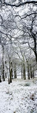 Light Dusting of Dnow in English Woodland, West Sussex, England, United Kingdom, Europe by Giles Bracher