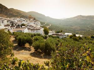 Olive Groves, Zuheros, Near Cordoba, Andalucia, Spain, Europe by Giles Bracher
