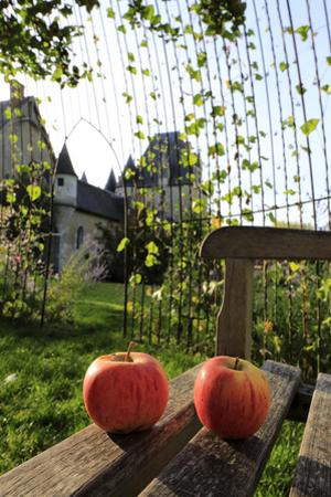 Château de Fougères-sur-Bièvre, ensemble nord est vu de la volière du jardin by Gilles Codina