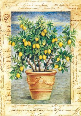 Fruti Mediterranei IV by Gina De Francesco