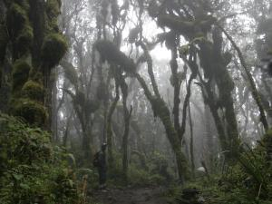 African Porter in the Rainforest of Mount Kilimanjaro by Gina Martin