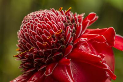 https://imgc.allpostersimages.com/img/posters/ginger-blossom-hawaii-tropical-botanical-garden-hawaii-usa_u-L-PN6NQU0.jpg?artPerspective=n