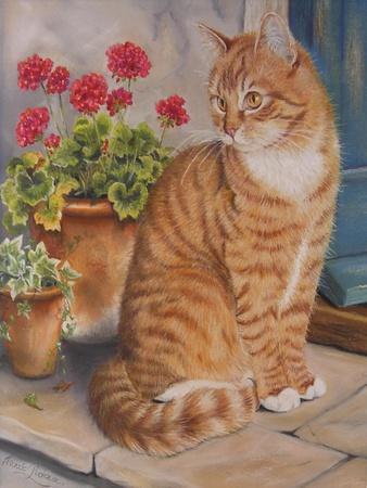 https://imgc.allpostersimages.com/img/posters/ginger-cat-on-doorstep_u-L-PYMD2E0.jpg?p=0