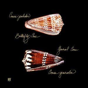 Striking Shells III by Ginny Joyner