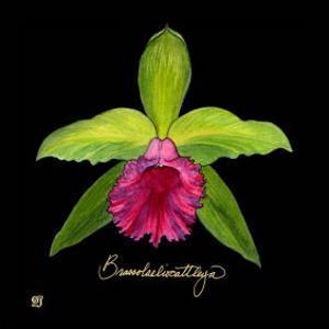 Vivid Orchid I by Ginny Joyner