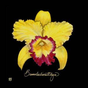 Vivid Orchid VII by Ginny Joyner