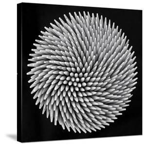 Hypnosis by Giorgio Toniolo