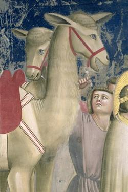 Adoration of the Magi, C.1305 (Detail) by Giotto di Bondone
