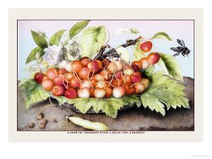 Dish of Cherries with a Bean and a Hornet by Giovanna Garzoni