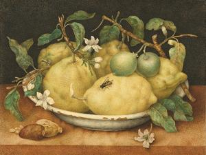 Still Life with a Bowl of Citrons, C.1640 by Giovanna Garzoni