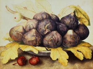 Still Life with Bowl of Figs, c.1650 by Giovanna Garzoni
