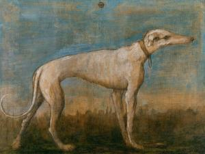Greyhound by Giovanni Battista Tiepolo