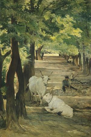 Avenue with Oxen and Stonebreaker
