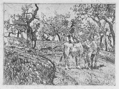 Cattle Amongst Olive Trees