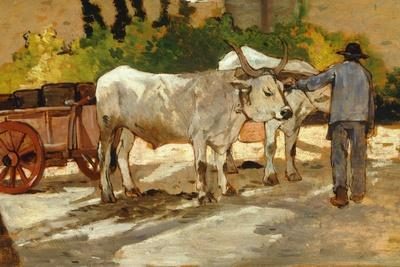 Oxen in Yard