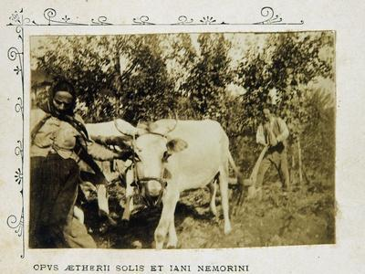 Farmers with Plow Pulled by Oxen