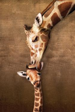 Giraffe Mother's Kiss Educational Poster