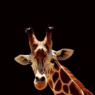 https://imgc.allpostersimages.com/img/posters/giraffe_u-L-Q1038ZD0.jpg?p=0