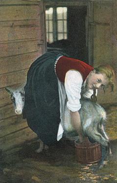 Girl Milking Goat, Norway