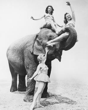 Girls Free Ride on Elephant