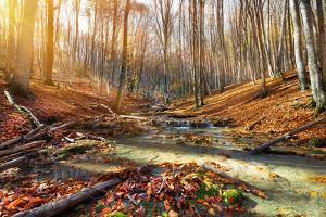 Wild Mountain River in the Autumn Forest by Givaga