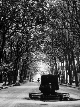 Cours Mirabeau, One of the Main Avenues in Aix En Provence by Gjon Mili