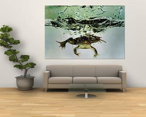 Frog Jumping Into an Aquarium by Gjon Mili